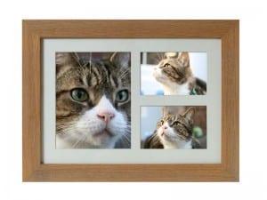maxi frame