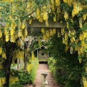Pet Cremation London Resting Pets Wisteria Garden