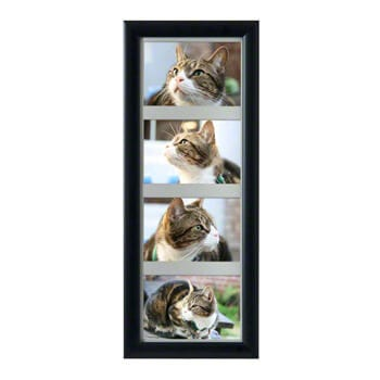pet urns multi frame
